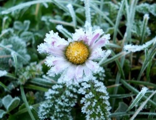 Proglašena prirodna nepogoda uzrokovana mrazom