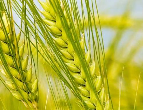 Obavijest – Poljoprivrednim proizvođačima s područja Općine Rugvica